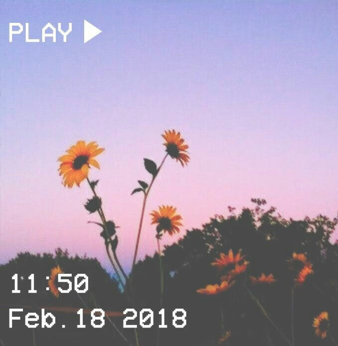 A Day To Remember Sunset Flowers Sunflowers Aesthetic Pink Blue Purple Yellow Flowerchild Retro Incorectusername Vsco