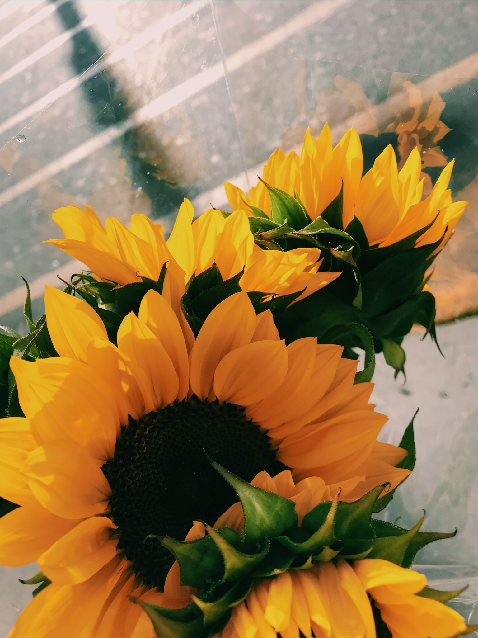 vsco yellow sunflowers flowers